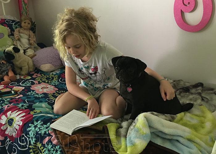 Ten Steps to the Perfect Homeschool Plan Read Aloud
