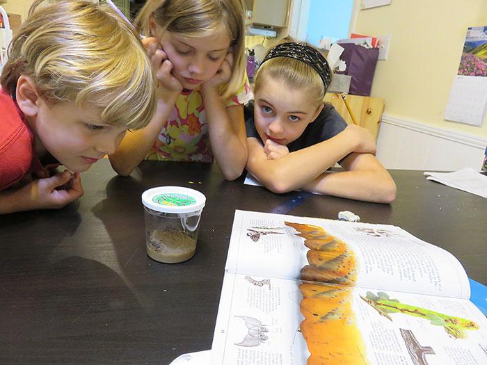 Exploring Nature with Children Butterflies