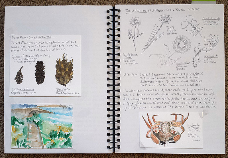 Hobbies for Mom Nature Journaling page
