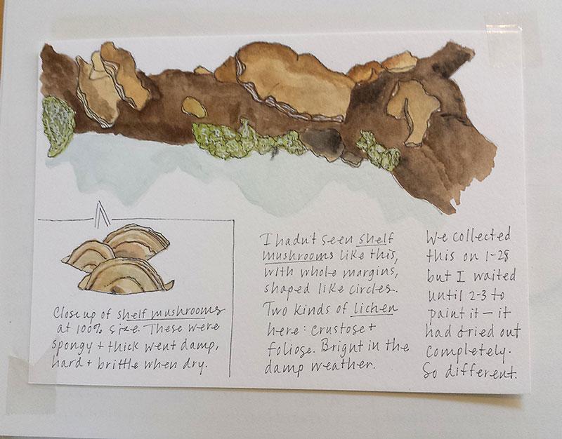 Hobbies for Mom Nature Journaling watercolor