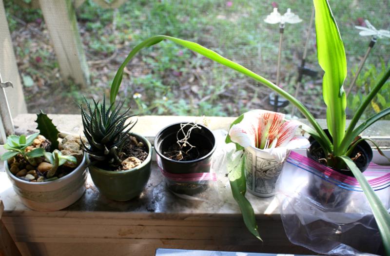 Greenhorn Gardeners: The Benefits of Gardening for Children